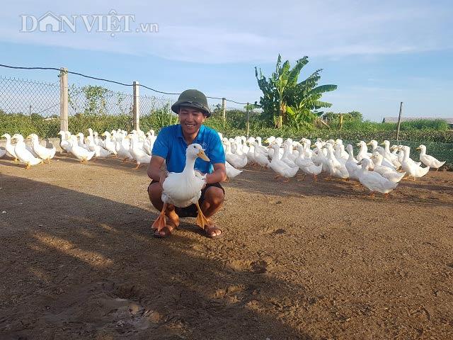 Nam Định: Nuôi vịt to xác, bán chạy như tôm tươi, thu tiền tỷ/năm - 1
