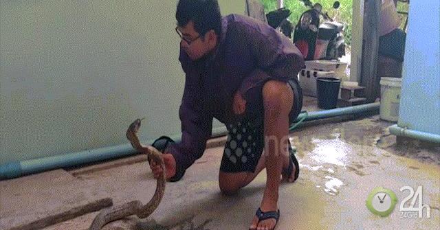 Nín thở xem thanh niên thu phục rắn hổ mang bằng tay không