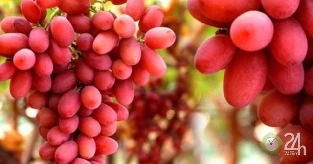 Những thực phẩm bổ máu, cực kỳ tốt cho thận-Sức khỏe đời sống