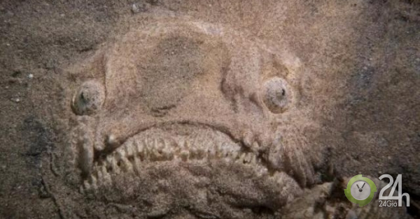 Đang lặn, người đàn ông phát hiện sinh vật kỳ dị như đến từ ngoài hành tinh