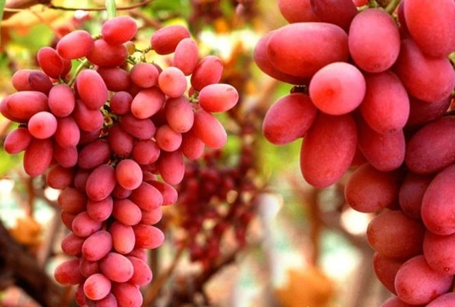 Những thực phẩm bổ máu, cực kỳ tốt cho thận - 6