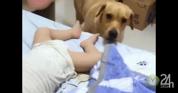 Chó đắp chăn cho em bé gây sốt mạng xã hội