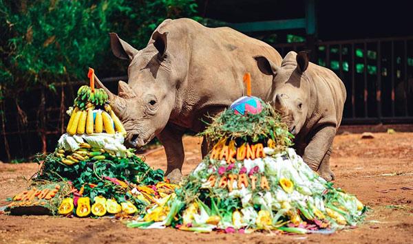 Vinpearl Safari chào đón tê giác thứ 3 chào đời - 3