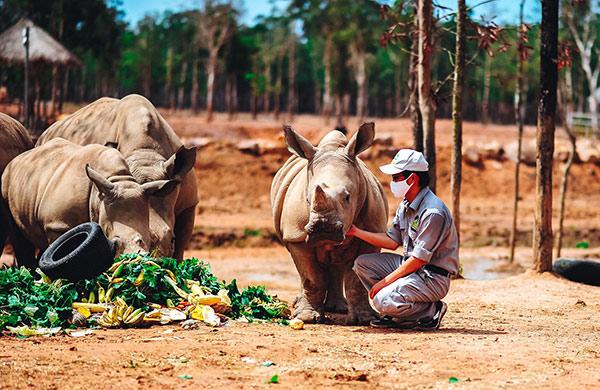 Vinpearl Safari chào đón tê giác thứ 3 chào đời - 4