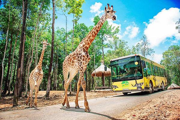 Vinpearl Safari chào đón tê giác thứ 3 chào đời - 9