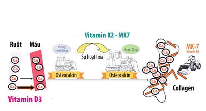 Bổ sung vitamin K2 như thế nào để trẻ tăng chiều cao tốt nhất? - 1