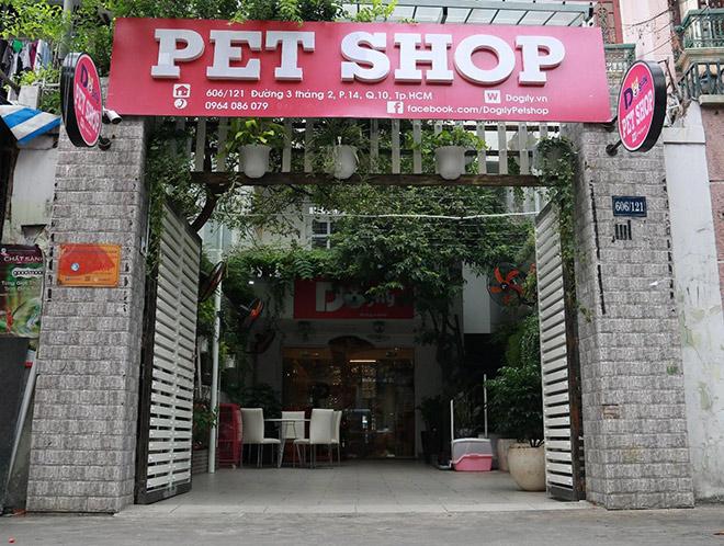"""Dogily Petshop – """"Thiên đường vàng"""" của loài mèo Anh lông ngắn - 2"""