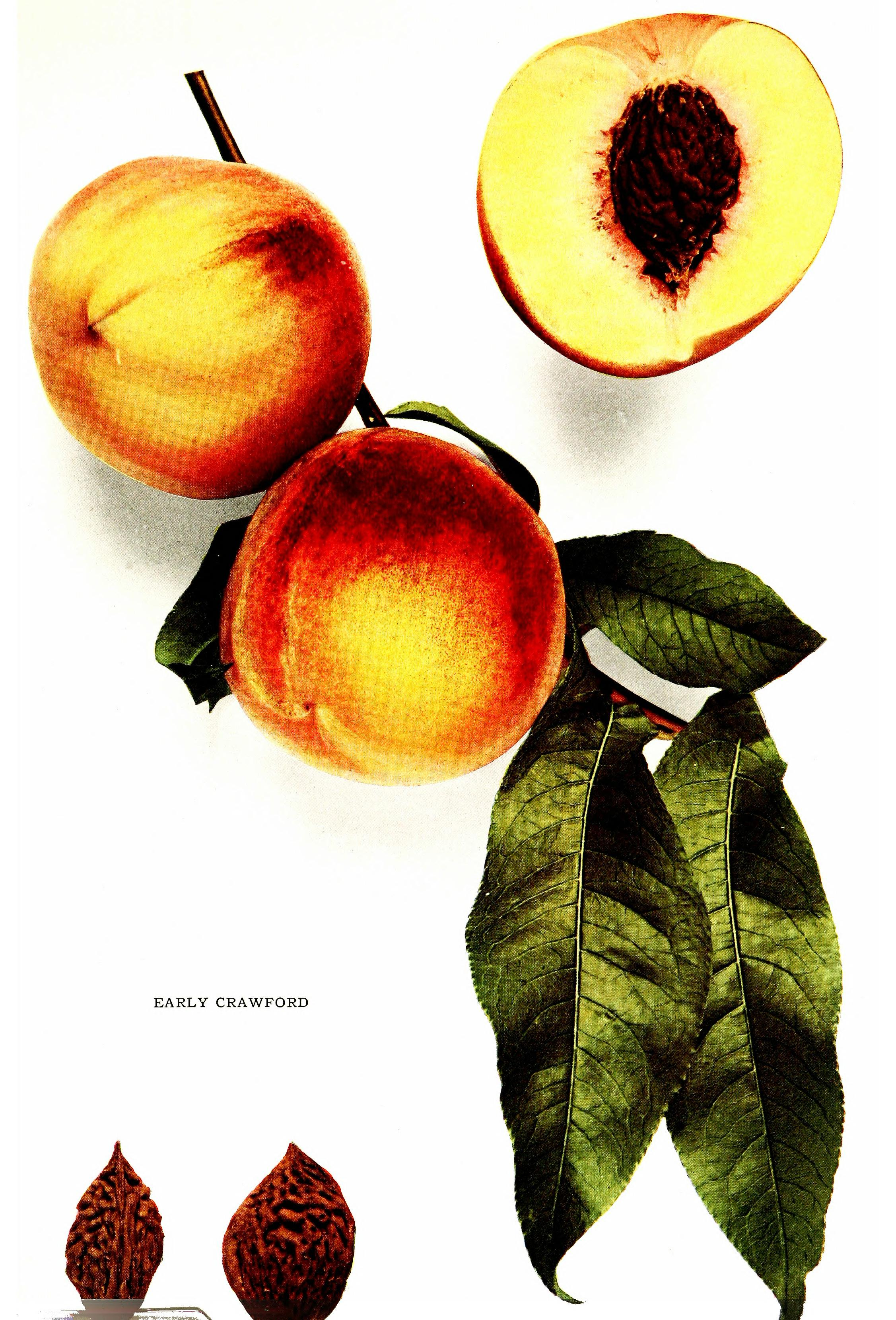 11 loại hoa quả hỗ trợ giảm cân tốt nhất, giúp bạn lấy lại dáng thon tức thì - 4