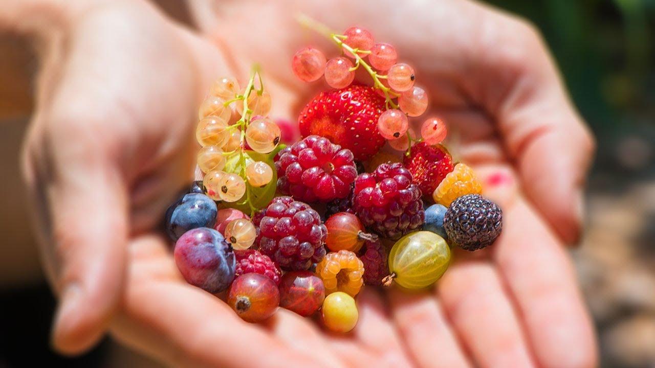 11 loại hoa quả hỗ trợ giảm cân tốt nhất, giúp bạn lấy lại dáng thon tức thì - 3