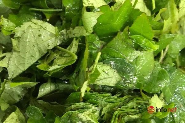 Nhớ canh chua cá mờm nấu lá vông vang - 3