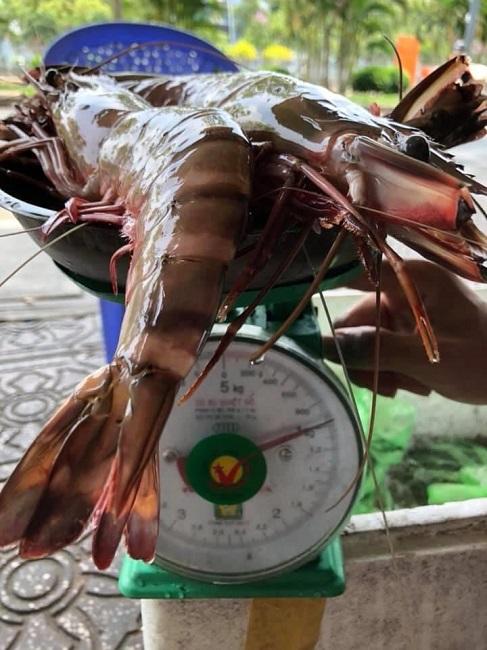 """Tôm sú cụ """"khổng lồ"""" giá hơn 1 triệu đồng/kg, khách ráo riết săn lùng - 2"""