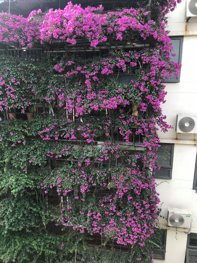 """Ngắm ngôi nhà hoa giấy """"vạn người mê"""" độc nhất ở Hà Nội - 11"""