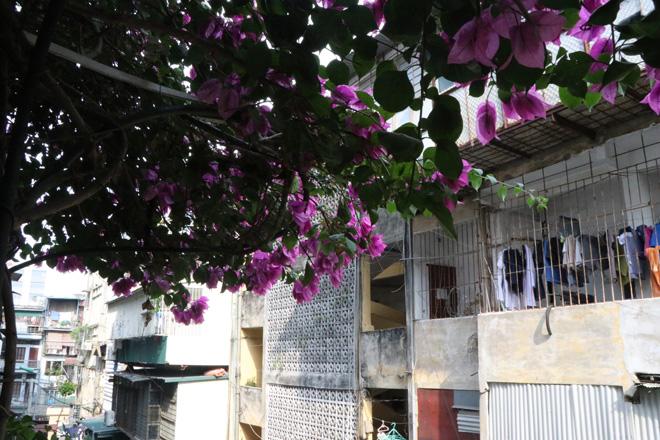 """Ngắm ngôi nhà hoa giấy """"vạn người mê"""" độc nhất ở Hà Nội - 16"""