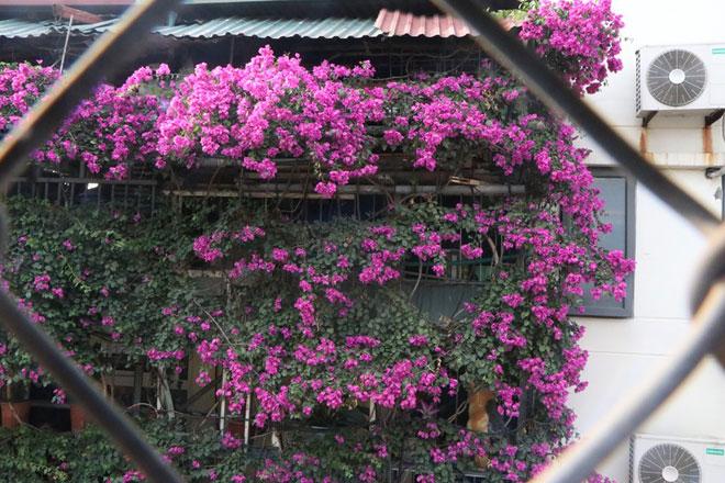 """Ngắm ngôi nhà hoa giấy """"vạn người mê"""" độc nhất ở Hà Nội - 9"""