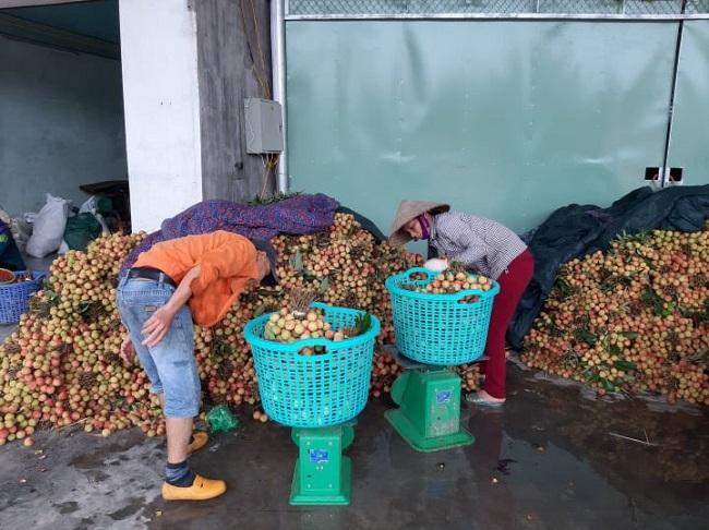 Một điểm thu mua vải tại khu Hà Đông (Thanh Hà).