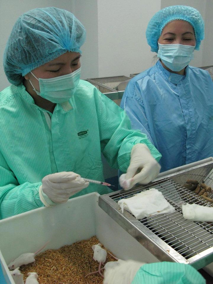Sau tiêm vắc-xin, hiện chuột thí nghiệm khoẻ mạnh và tiếp tục được theo dõi. Ảnh: BSCC.
