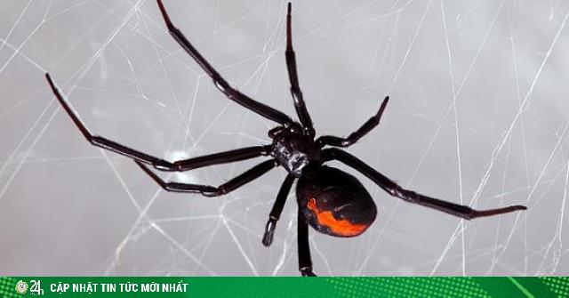 Cho nhện cực độc cắn vì muốn trở thành Người Nhện và cái kết
