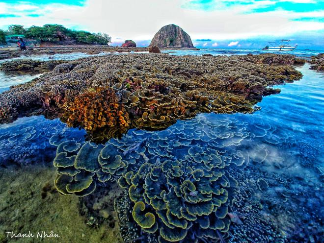 Tới Phú Yên ngắm rạn san hô trên cạn rực rỡ sắc màu - 2