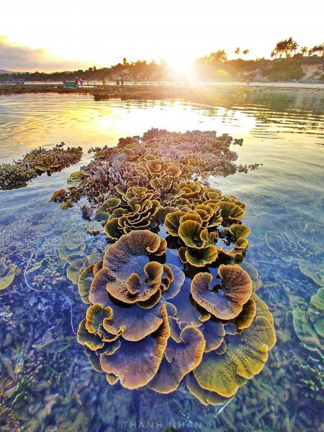 Tới Phú Yên ngắm rạn san hô trên cạn rực rỡ sắc màu - 3