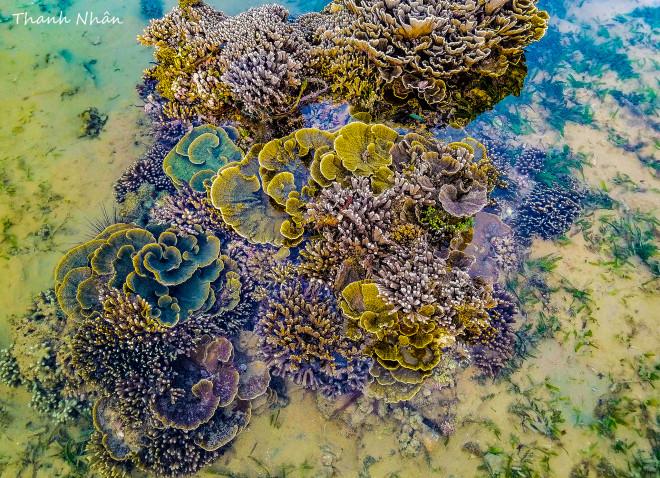 Tới Phú Yên ngắm rạn san hô trên cạn rực rỡ sắc màu - 6