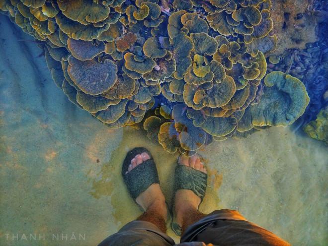 Tới Phú Yên ngắm rạn san hô trên cạn rực rỡ sắc màu - 7