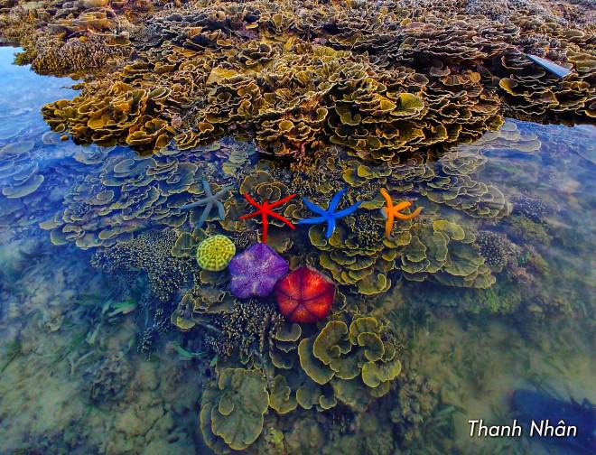 Tới Phú Yên ngắm rạn san hô trên cạn rực rỡ sắc màu - 8