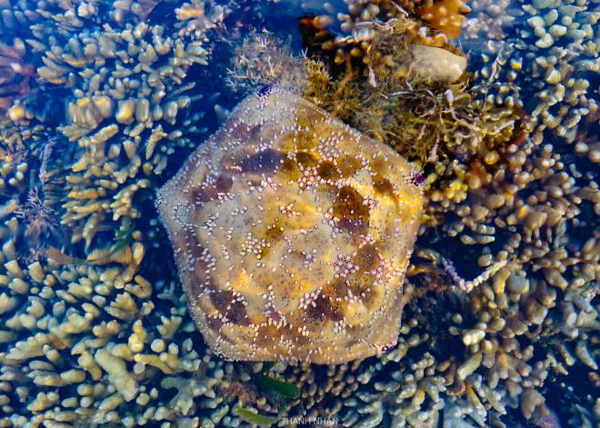 Tới Phú Yên ngắm rạn san hô trên cạn rực rỡ sắc màu - 10