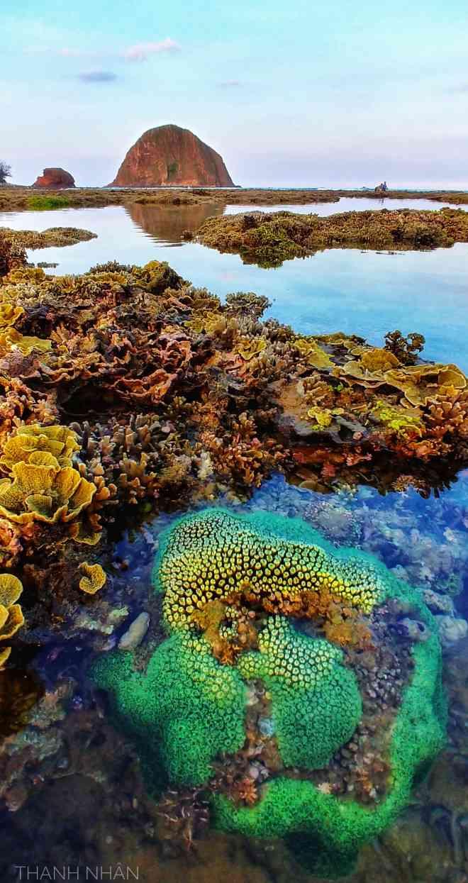 Tới Phú Yên ngắm rạn san hô trên cạn rực rỡ sắc màu - 12