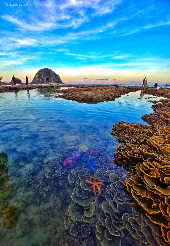 Tới Phú Yên ngắm rạn san hô trên cạn rực rỡ sắc màu - 14
