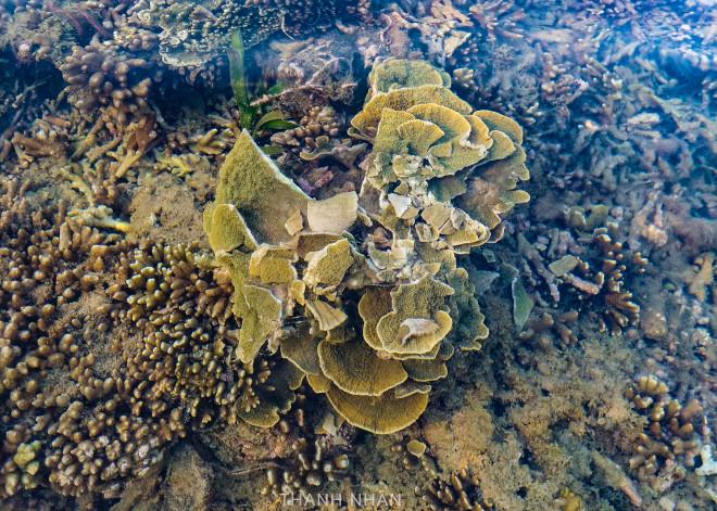 Tới Phú Yên ngắm rạn san hô trên cạn rực rỡ sắc màu - 15