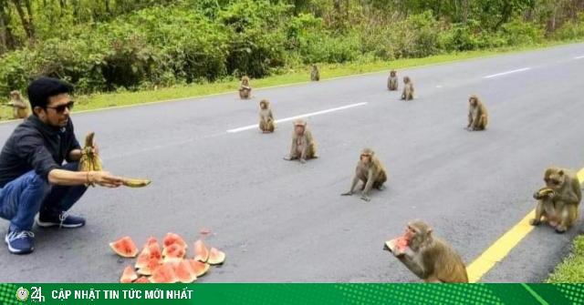 Khỉ thực hiện giãn cách xã hội không khác gì người trong dịch Covid-19