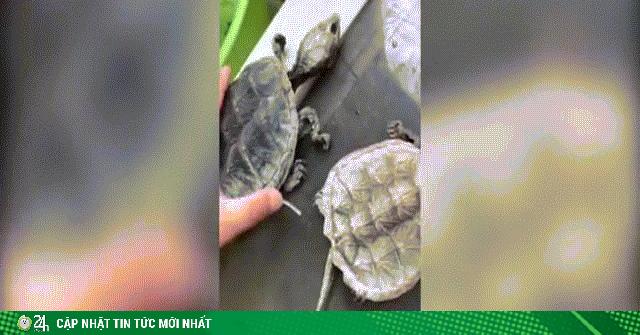 Video: Để rùa ở ký túc xá, 5 tháng sau quay lại thấy cảnh sốc