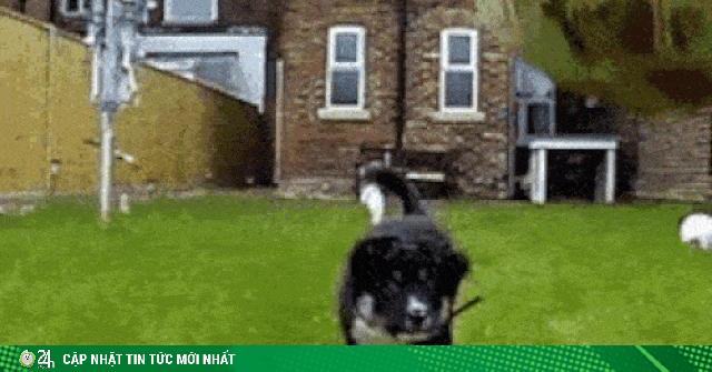 Bật cười với những tình huống ngáo ngơ của thú cưng