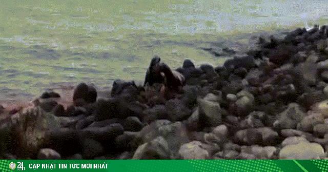 Video: Bị cá mập cắn đứt nửa thân, sư tử biển vẫn chạy thoát lên bờ