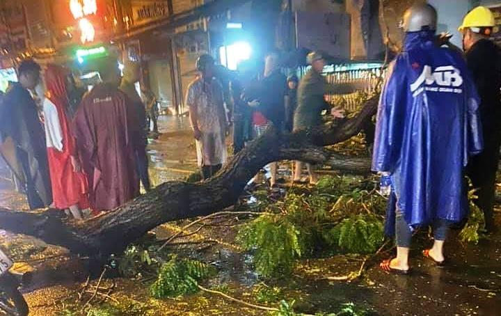 Cây xanh tét nhánh đè chết người ở Sài Gòn - 1