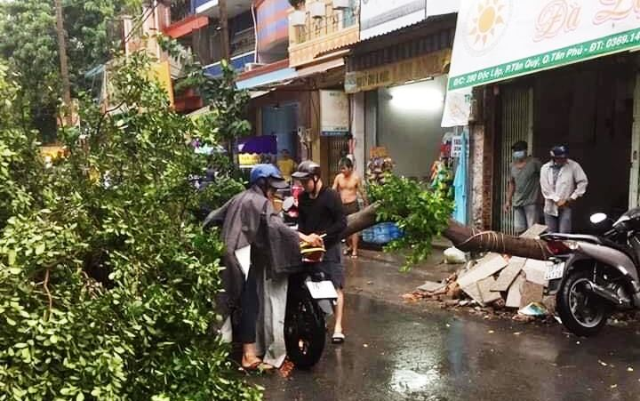 Cây xanh tét nhánh đè chết người ở Sài Gòn - 3