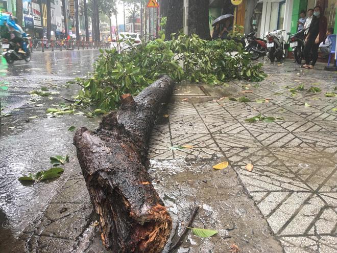 Cây xanh tét nhánh đè chết người ở Sài Gòn - 4