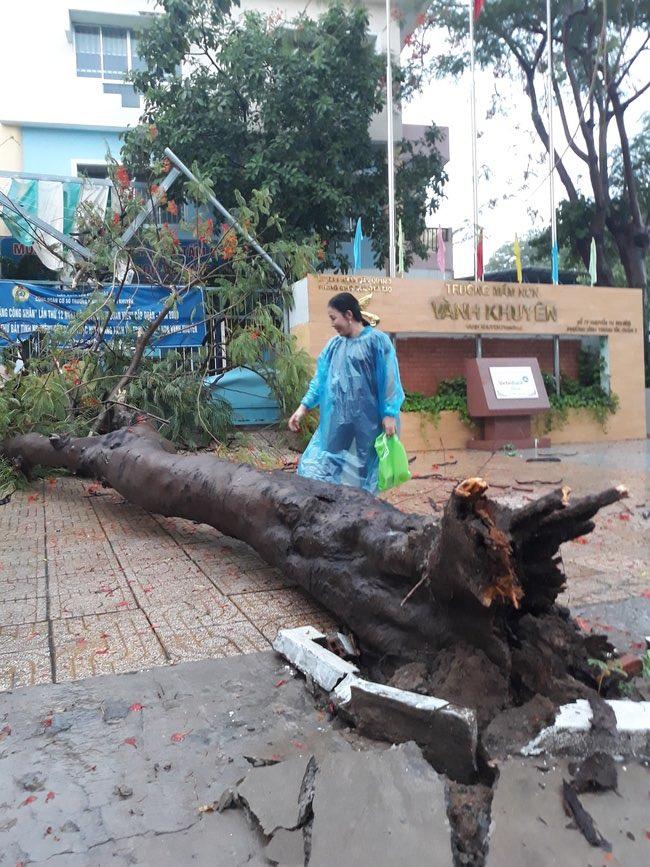 Cây xanh tét nhánh đè chết người ở Sài Gòn - 5