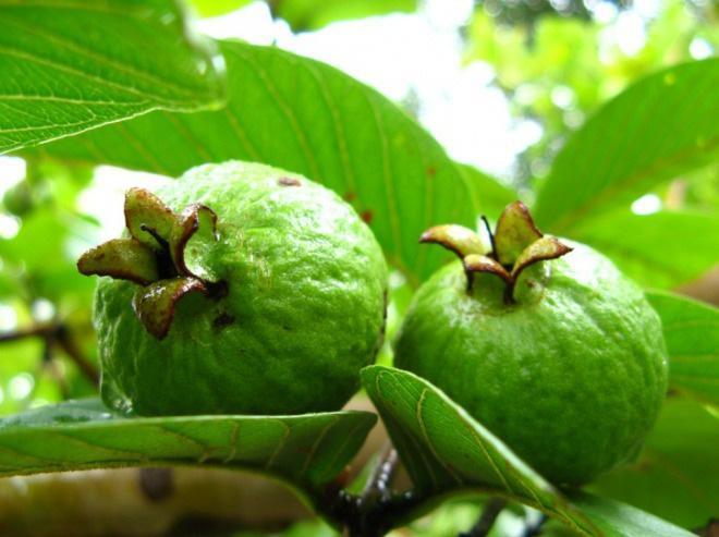 Rất nhiều người bỏ hạt đi khi ăn loại quả này vì sợ táo bón, đó là một sai lầm nghiêm trọng - 2