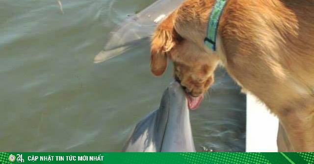 Bức ảnh tình bạn giữa chó và cá heo đốn tim dân mạng