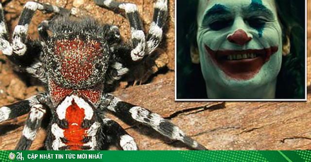 Phát hiện loại nhện mới có vẻ ngoài giống hệt nhân vật Joker