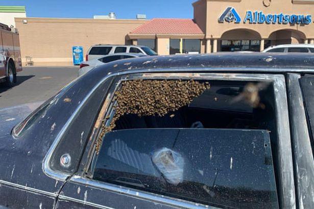 Vừa vào siêu thị được 10 phút, quay lại thấy 15.000 con ong chiếm xe - hình ảnh 1