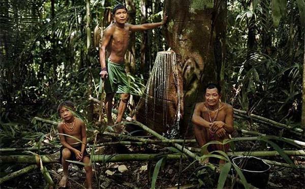 Lạ lùng bộ lạc thường chỉ ngủ 30 phút, không có số đếm sống trong rừng thẳm - hình ảnh 1