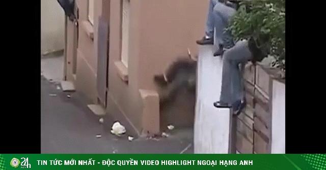 Video: Thót tim cảnh bò tót nổi điên tấn công người trên phố