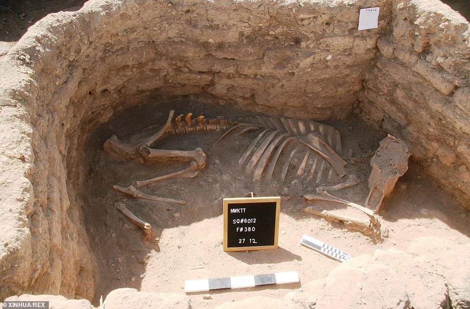 """Những phát hiện mới về """"thành phố vàng bị thất lạc"""" 3500 năm tuổi ở Ấn Độ - hình ảnh 6"""