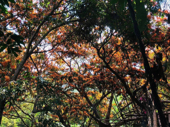 """Hoa trang rừng nở rộ sau nhiều năm, suối Tà Má trở thành điểm """"check-in"""" mới của giới trẻ - 7"""