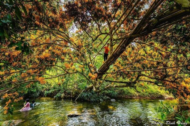"""Hoa trang rừng nở rộ sau nhiều năm, suối Tà Má trở thành điểm """"check-in"""" mới của giới trẻ - 8"""