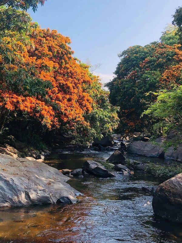 """Hoa trang rừng nở rộ sau nhiều năm, suối Tà Má trở thành điểm """"check-in"""" mới của giới trẻ - 3"""