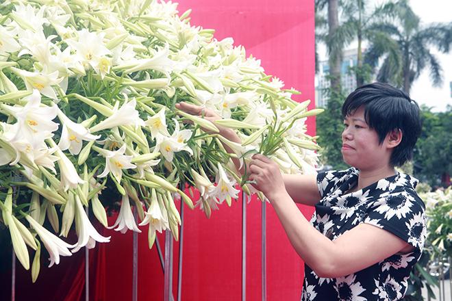 """Xuất hiện nón lá """"khổng lồ"""" bằng hoa loa kèntrên phố Hà Nội - hình ảnh 5"""