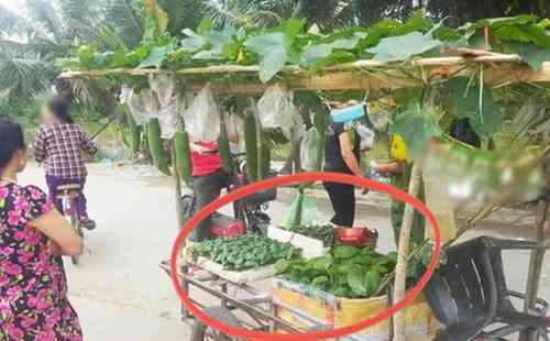 Sạp rau đặc biệt gây sốt mạng vì có cách bán hàng quá cao tay, ai thấy cũng phải vào mua - 1
